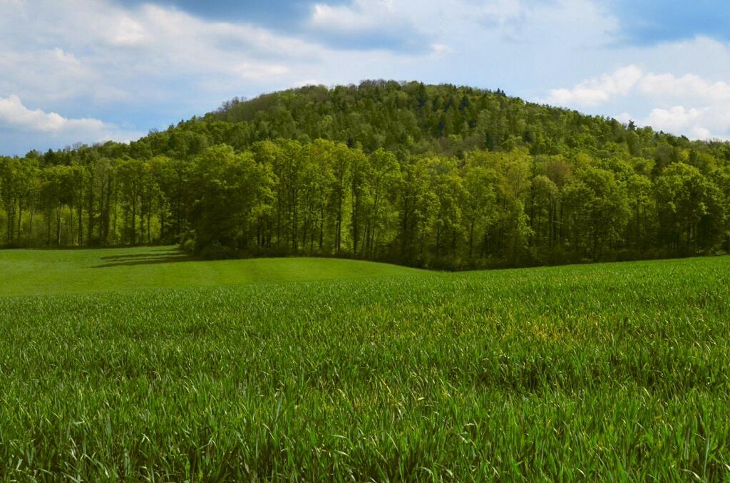 Wunnenstein in grün....