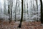 Wunsch-Wald