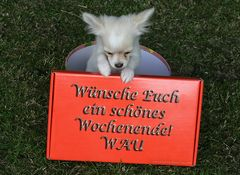 Wunschhund