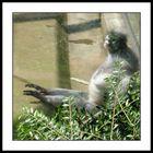 wuppertaler zoo I