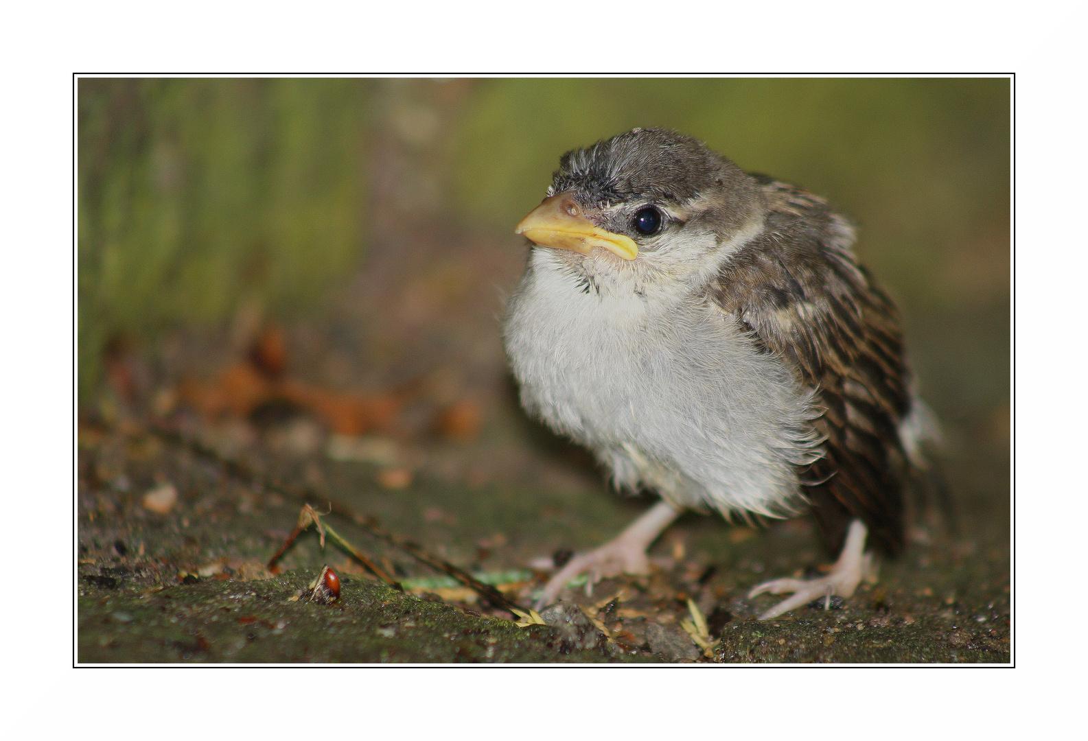 Wurde vom Gewittersturm wohl aus dem Nest geblasen...