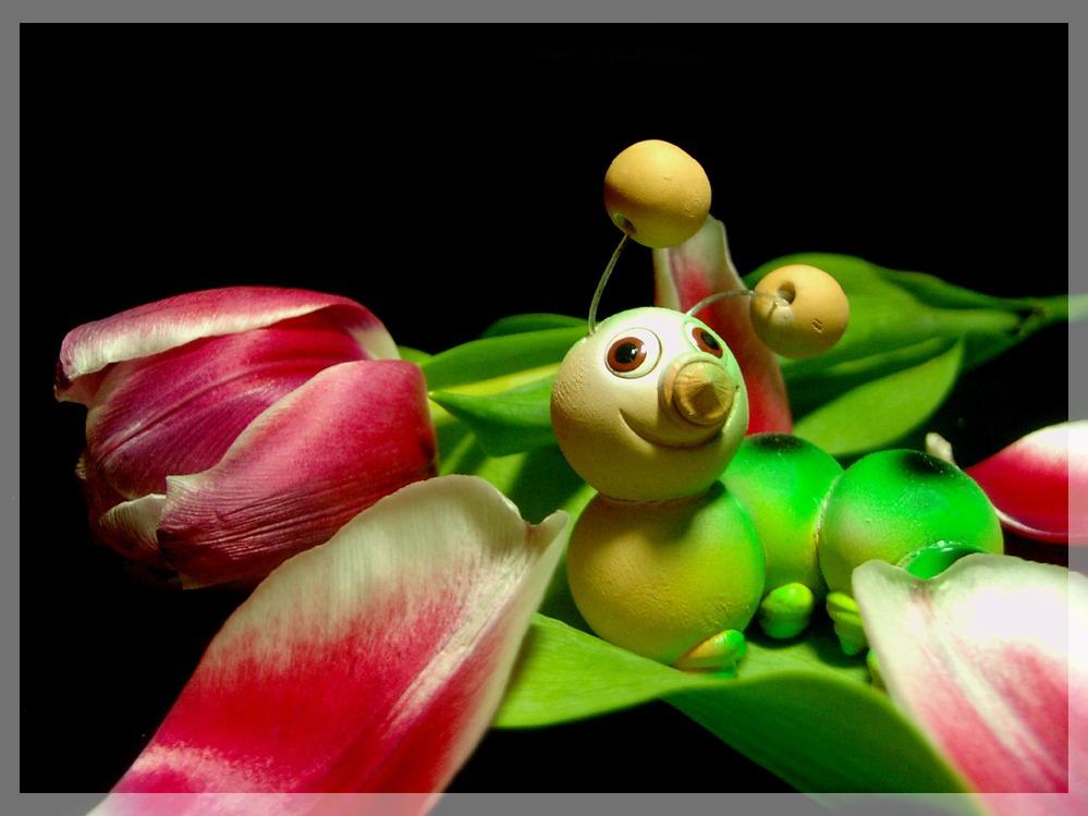 Wurm mampft Tulpe ...