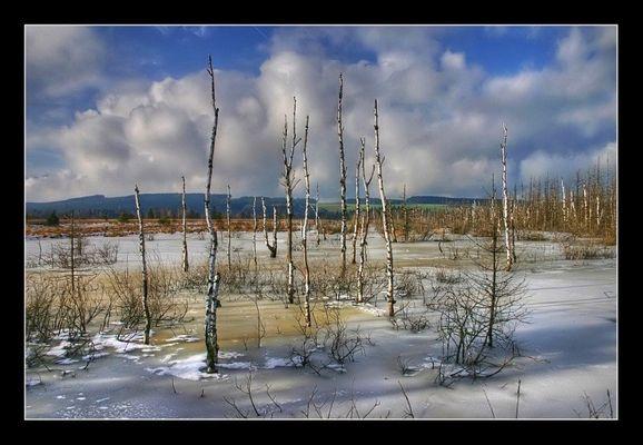 Wurzacher Ried im Winter