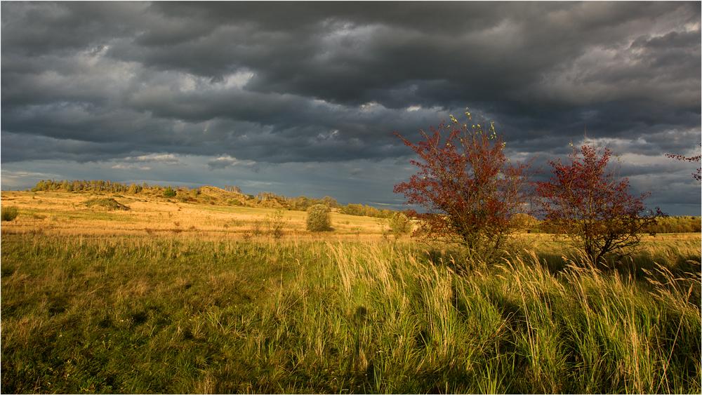 Wurzener Heideland