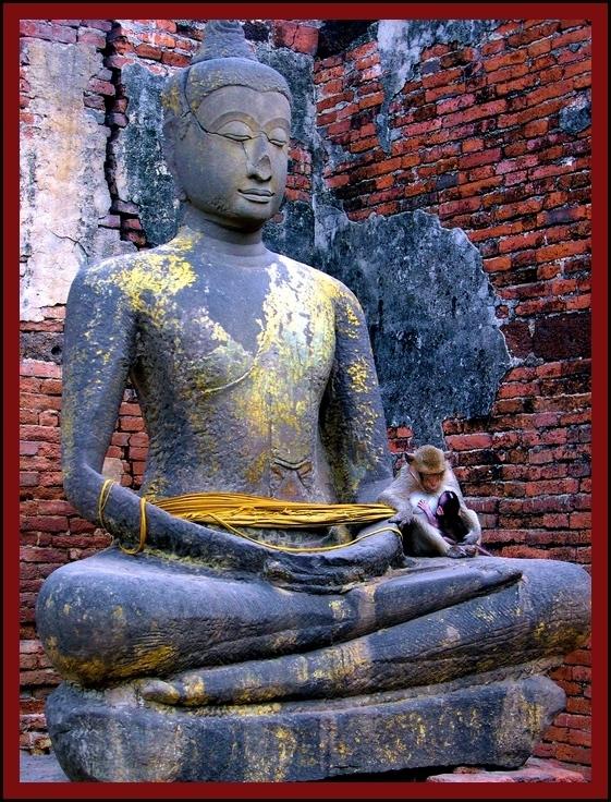 Wußtet ihr, dass Affen buddhistisch sind??