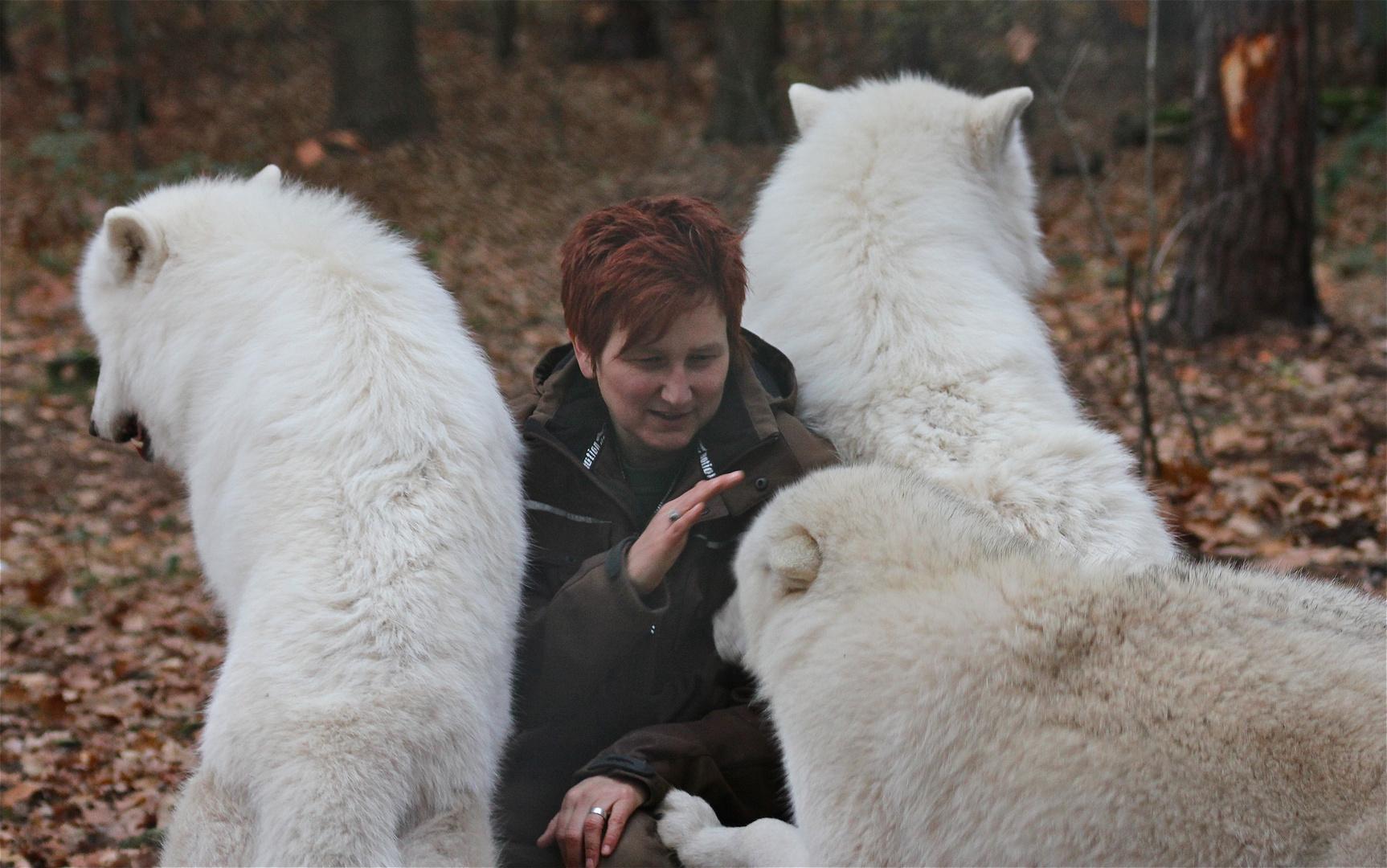 WW 6/9 - Kommt ein dritter Wolf dazu, zeigt man ihm unmissverständlich, daß auch er . . .