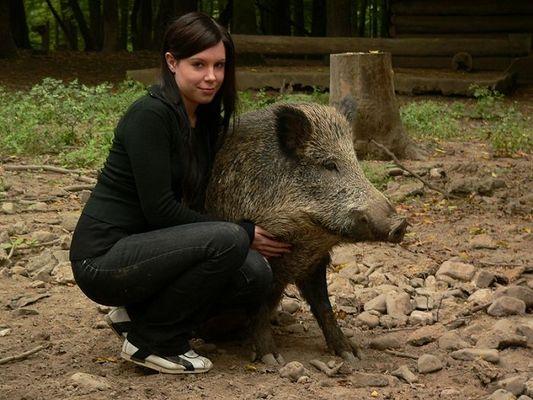 www.wildschweine.net