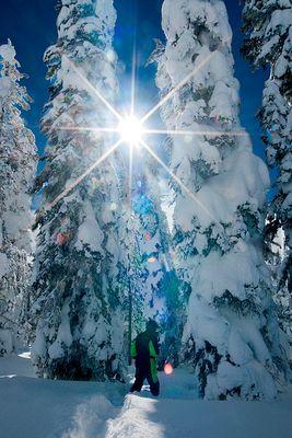Wyoming Winter Trees