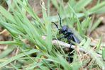 x- Käfer, Heute entdeckt