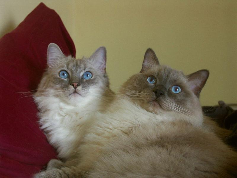 X-mas Cats