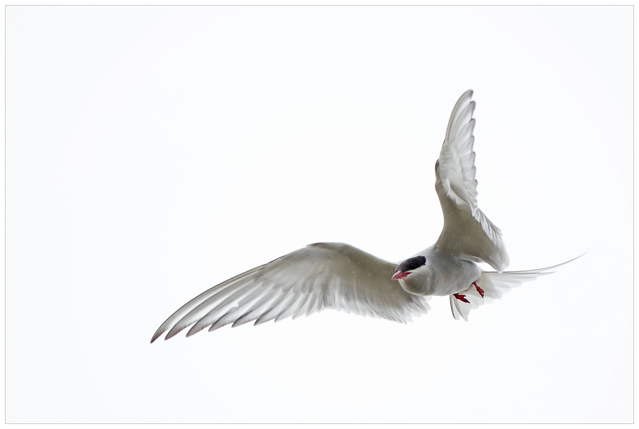 X-Ray-Bird