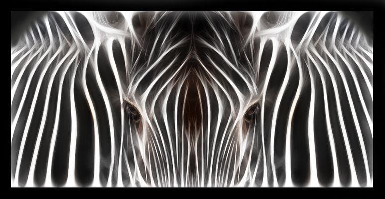 x ray zebra