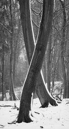 X Trees