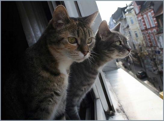Xena und Pepper sind neugierig...!