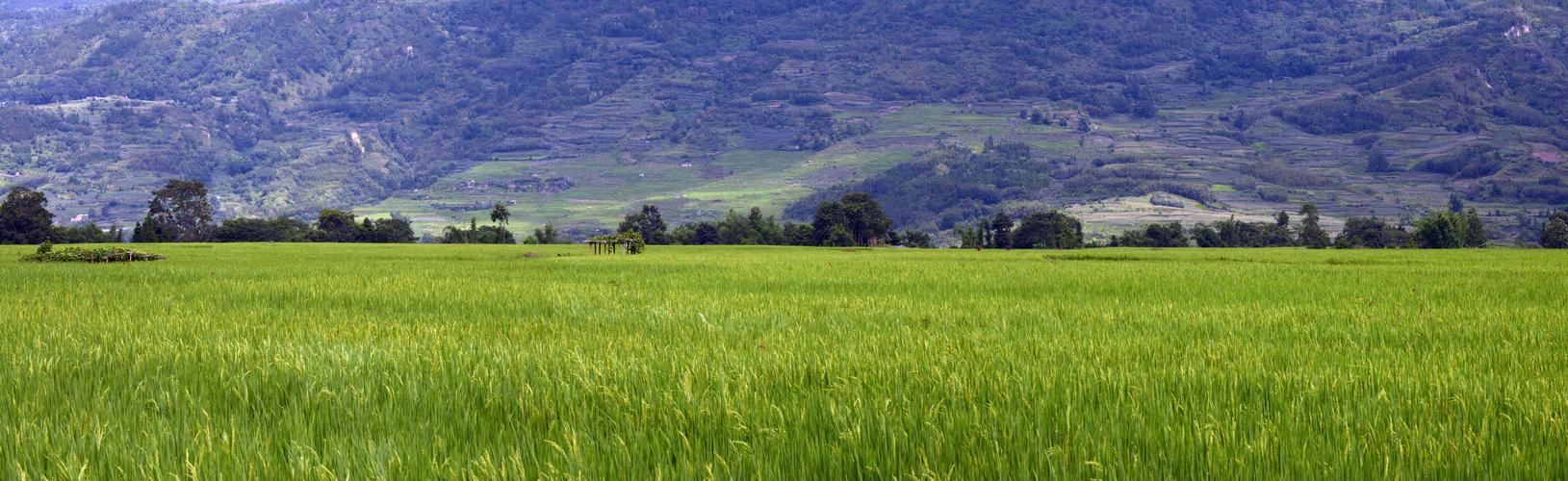 Xianduo
