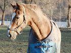 XIII - Mein Pferd