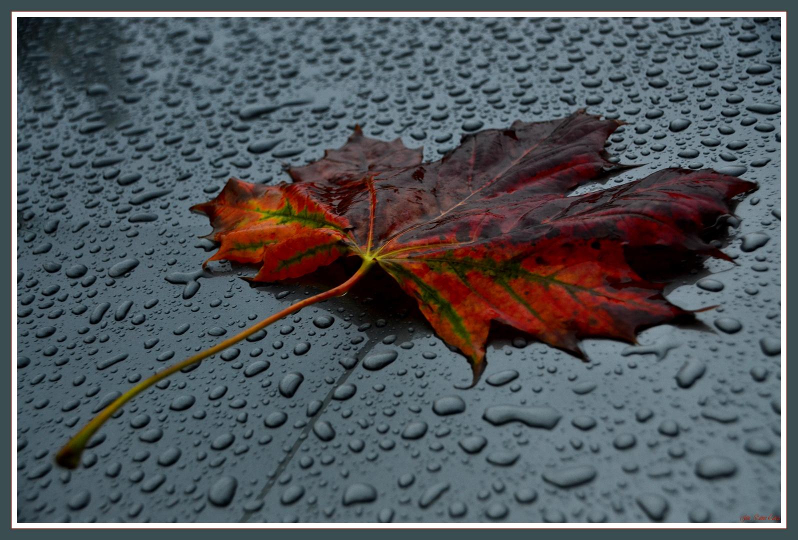 xxx_-O Herbst  O-_xxx