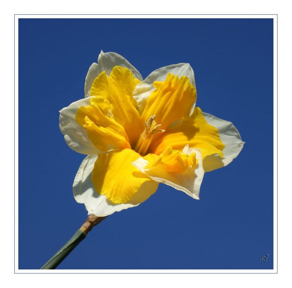 Y a le printemps qui chante ..........