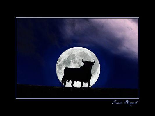 Y ese Toro..que sigue Enamorao de la Luna