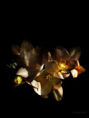 Y la luz habitó entre nosotros....