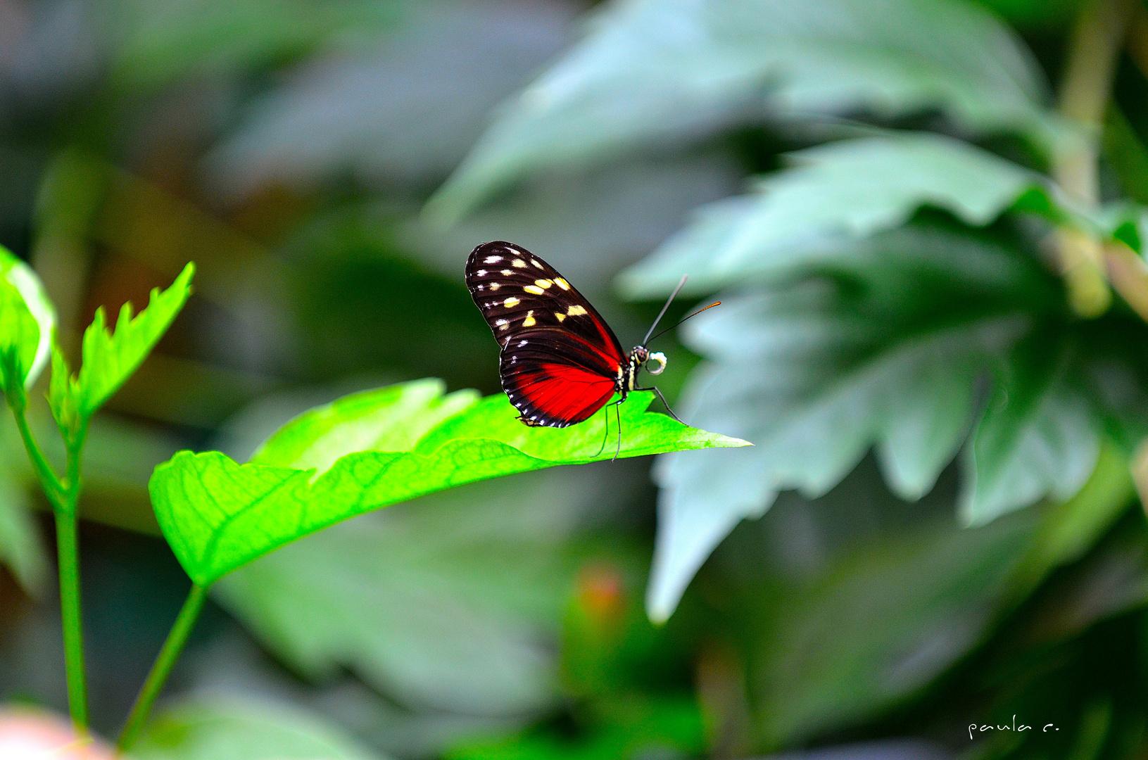 ...y mas color, mas belleza