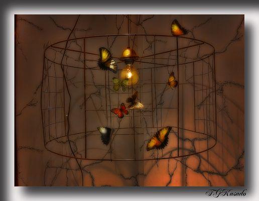 ¿y si la luz fueses Tu? ( A Lolita Cecilia ) Mi lady