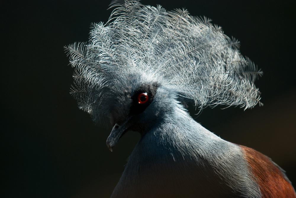 Y yo con estas plumas