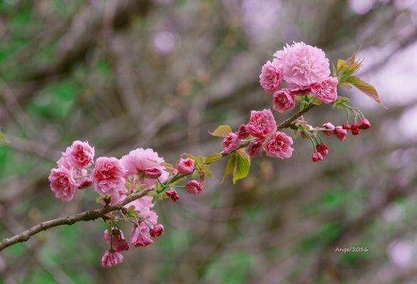 Ya es primavera!