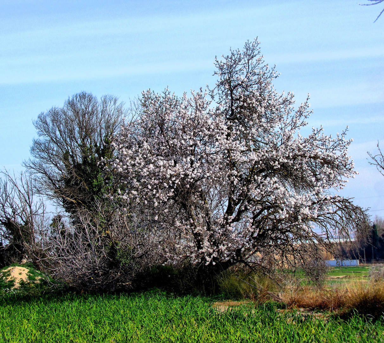 Ya llega la primavera !
