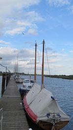 Yachthafen ... Wischhafen ... mit Möwe