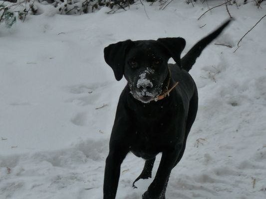 YahHoo vive la neige!!!