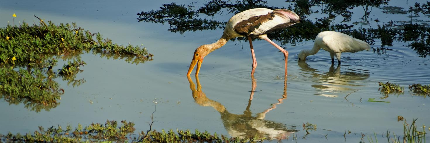Yala Nationalpark 4