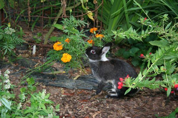 Yard bunny