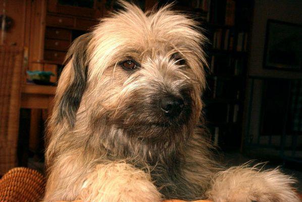 Yaris - Familienhund
