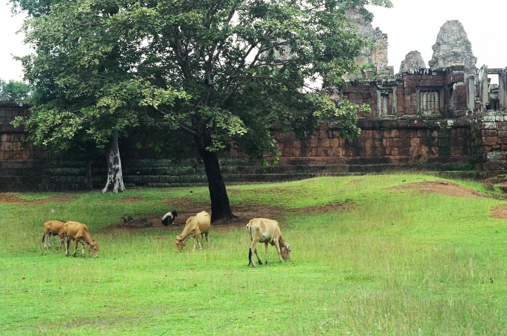 Yashodharapura