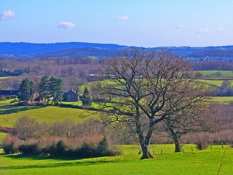 Ye Old Oak Tree