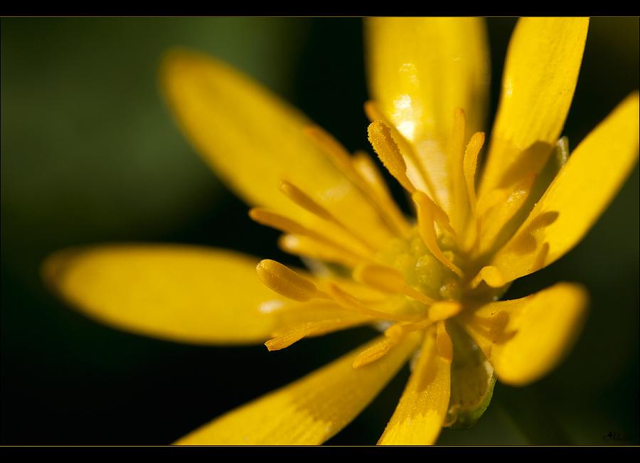 --Yellow--