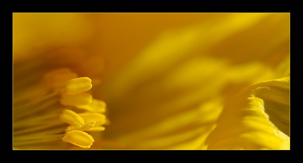 - - -  Yellow - - -