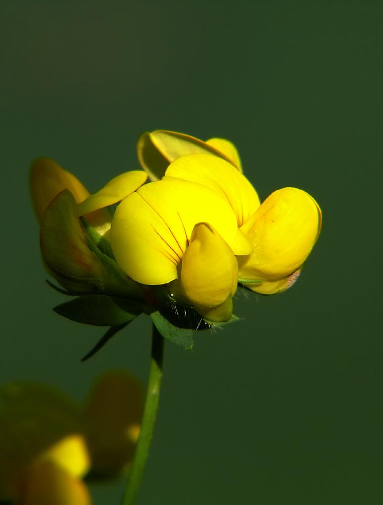 ...yellow