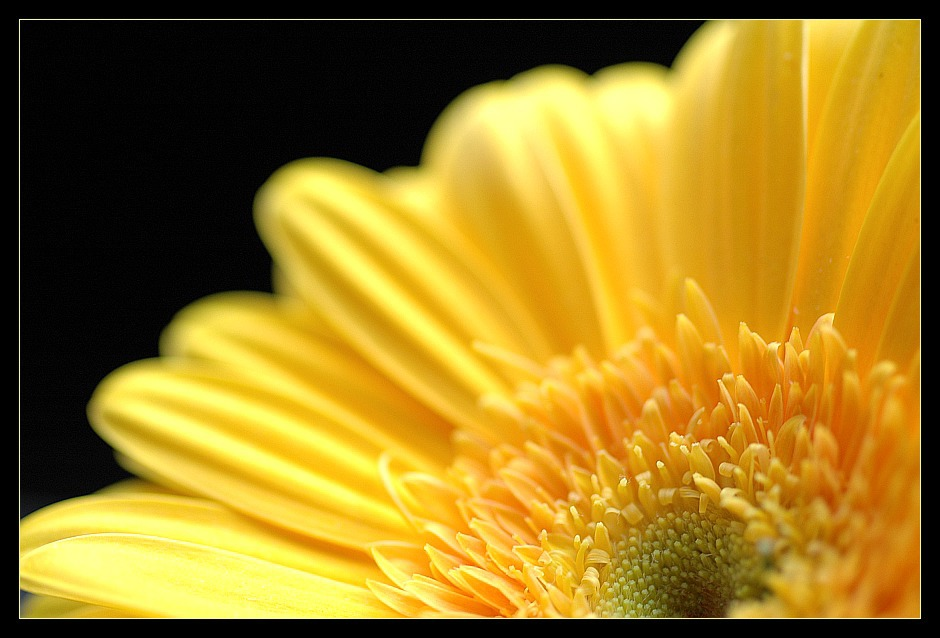 ... yellow beauty II ...