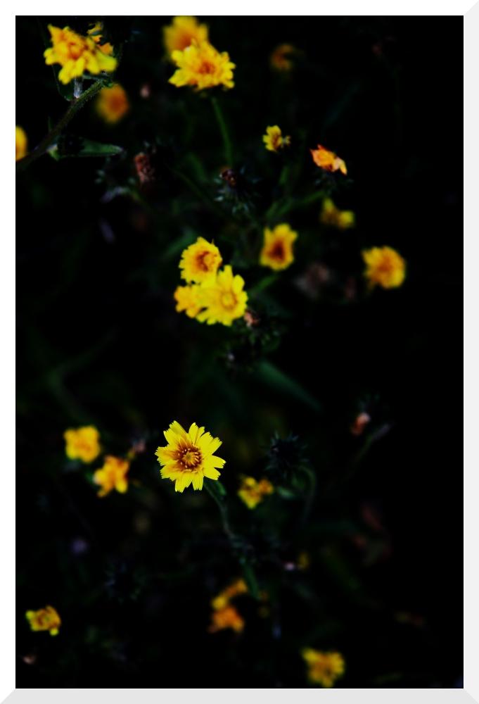 """Yellow Black"""