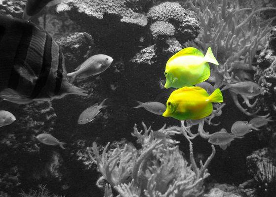 [ Yellow Blub Blub :) ]