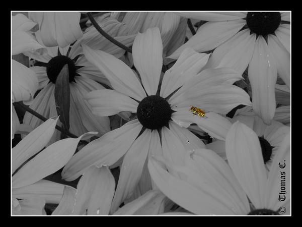 Yellow Bzz'