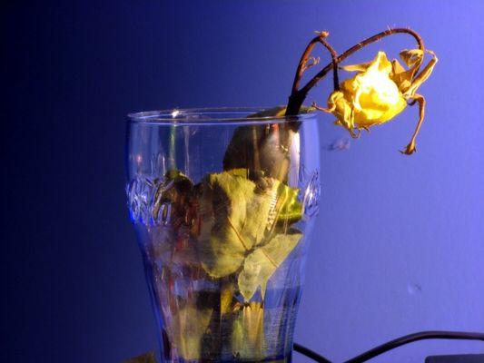 Yellow Coke Rose