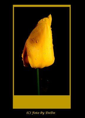 ..Yellow Dream...