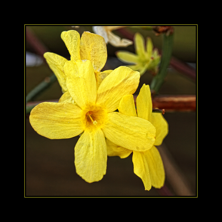 Yellow dreams 2