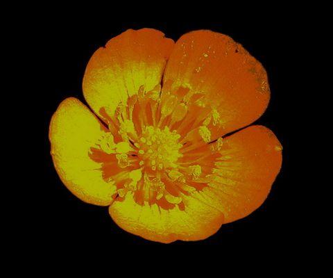 yellow flower....