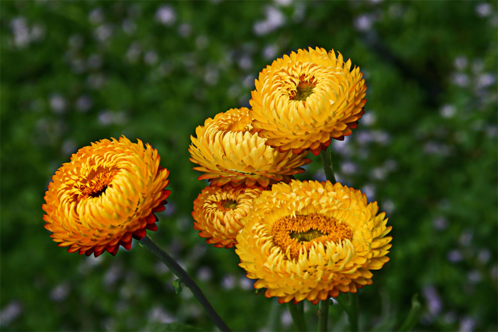 Yellow Flowers at Kew Gardens