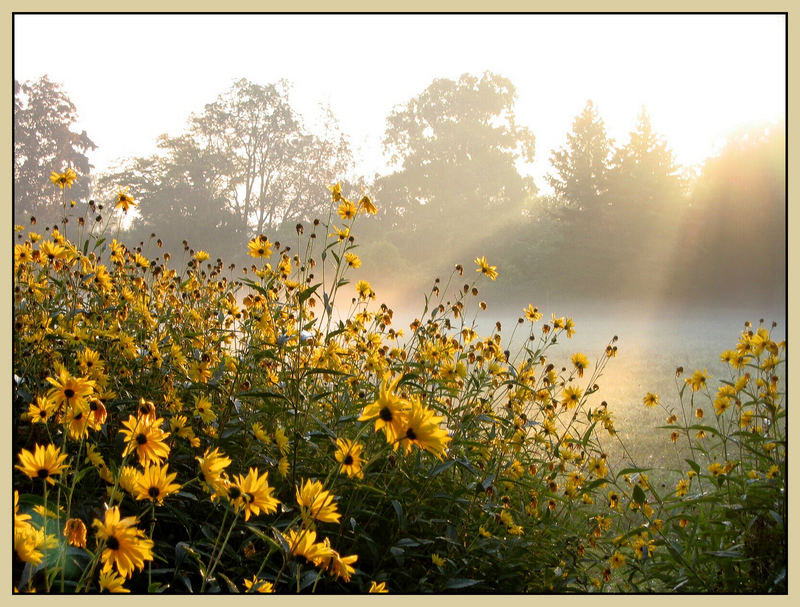 Yellow Flowers in the Morning