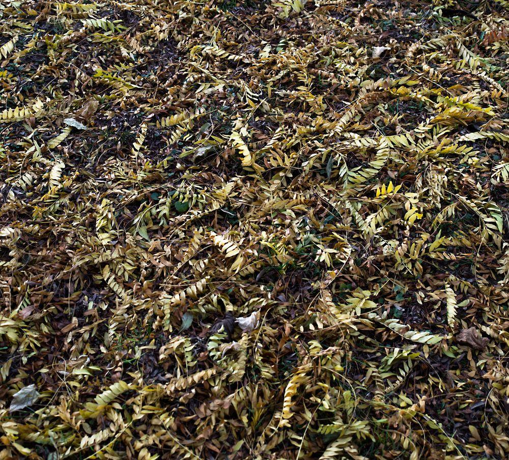 yellow green carpet